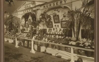 100 years ago in Sunnybank, 28 February 1921